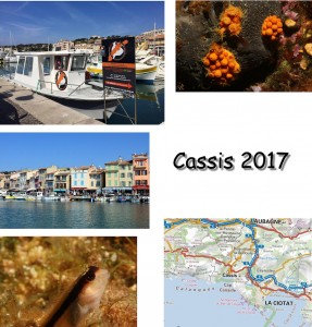 Stage Cassis